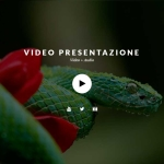 Spettacolare Video 4K fullscreen (con audio) per l'hero header