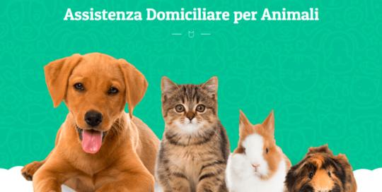 Un sito per veterinario sviluppato in WordPress